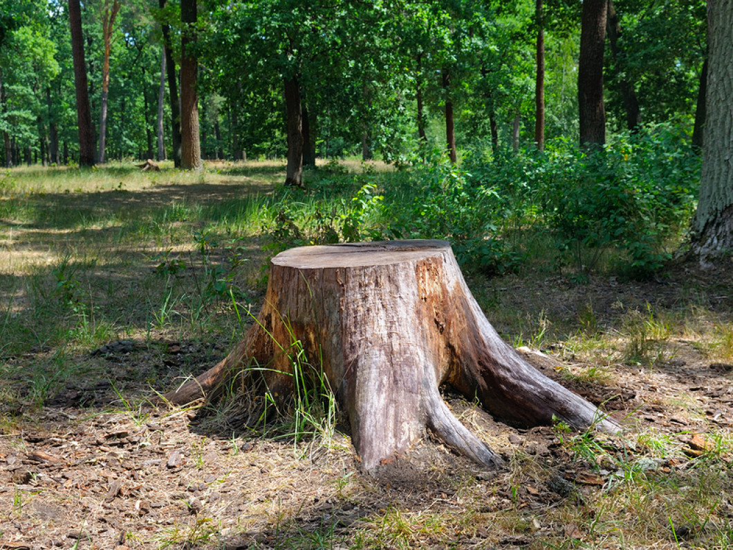 3 reasons to remove stumps from your yard