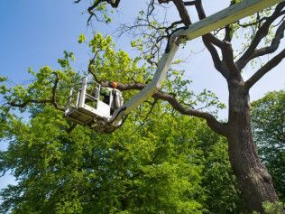 tree pruning service concord nc
